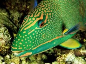 Pfish2