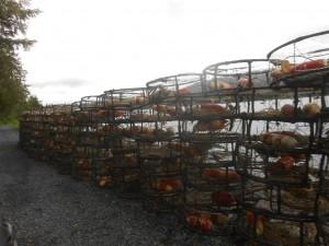 Dungeness Crab Pots