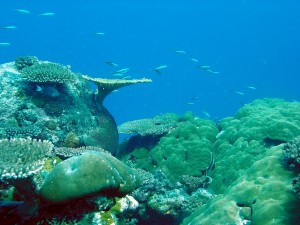 reef-in-Palau-with-fish-600x450