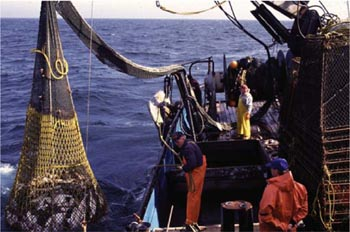 halibut_demersal_trawlers