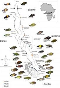 Fish-of-Lake-Tanganyika-Map
