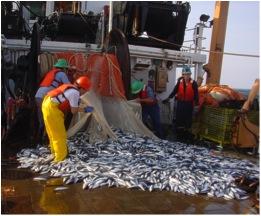 herringcatch