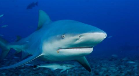 shark-ridlon-kiphart-dpc