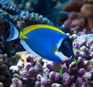 FISH101 coral fish