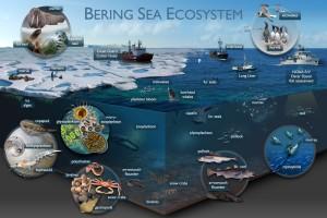 bering-sea-ecosystem