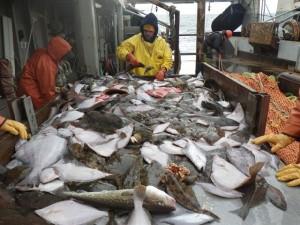 halibut_trawl_bycatch